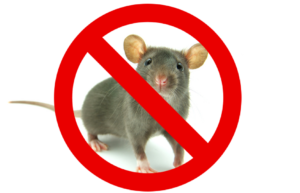 Pest Control for Monkstown & surrounding areas | Rat Control