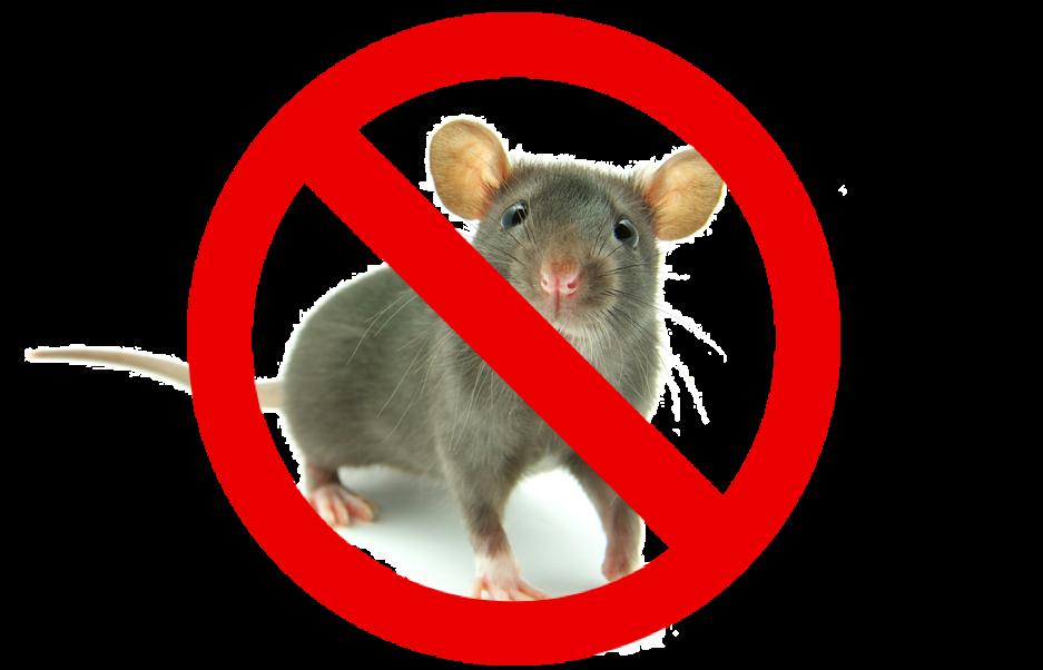 Local Pest Control for Bray area: No Callout Fee   Call 01 513 4941